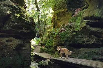 Randonnée canine au Luxembourg