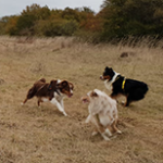 balade champ chien cyno'logik
